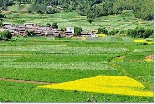 去年農業總產值超十萬億元 鄉村產業步入高質量發展快車道