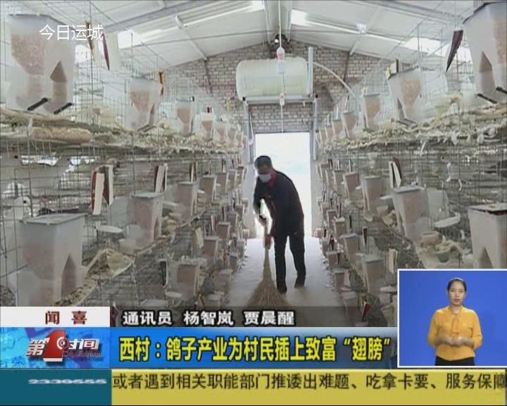 """聞喜西村:鴿子產業為村民插上致富""""翅膀"""""""